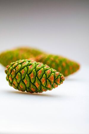 Group of green cones of wild pine (Pinus Silvestris L.). On white background.