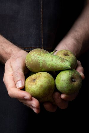 Close-up of hands offering fresh and raw green pears (variety conference, Pyrus communis conference). Dark background with space to insert your text.