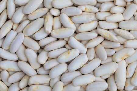 Texture of white beans (fabes) raw (legume)