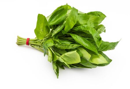 Bouquet of fresh basil leaves. Isolated on white background. Фото со стока