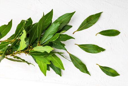 Bouquet of fresh bay leaves on white background.