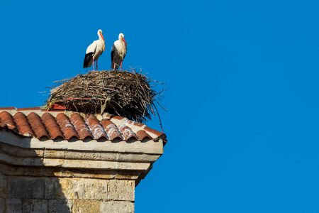 Pair of storks making a nest on the roof of a church. Sunny day and blue sky. 版權商用圖片