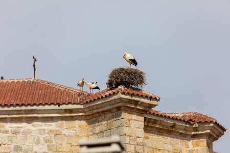 Several pairs of storks and nests on the roof of a church.