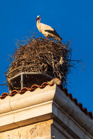 Stork in its nest on the roof of a church. Sunny day and blue sky.