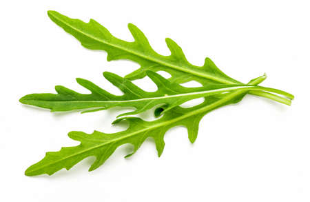 Bouquet of sprouts and leaves of green, natural, raw and freshly cut arugula (arugula) isolated on white background. Food of the Mediterranean Diet.