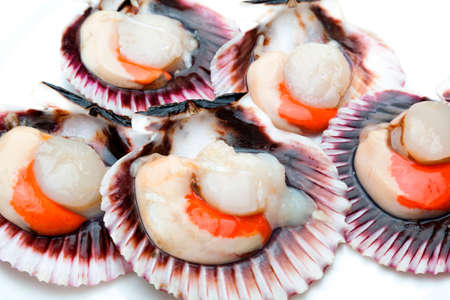 Scallops fresh, raw and clean on white background (scallops) Stock fotó