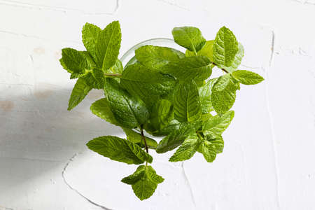 Bouquet of fresh mint (peppermint) branches and leaves, freshly cut with drops of water in a glass. On delicate white textured background.