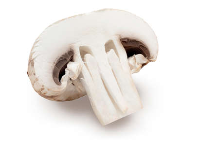 Halved mushroom (champignon, cut foot, Bisporus agaricus) and raw. Isolated on white background