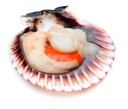 Fresh, raw and clean scallop isolated on white background (scallops). Closeup.