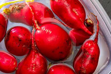 Ecological radishes (red radishes - radishes) of intense red color. Wash in a container of water. Stock fotó