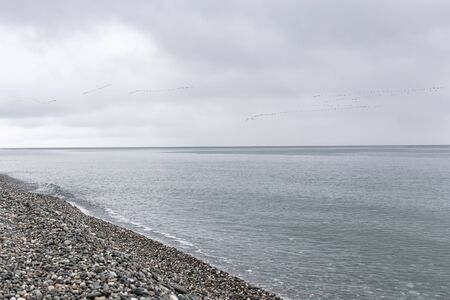 A flock of migratory birds flying wedge over the sea. Cloudy weather. Selective focus.