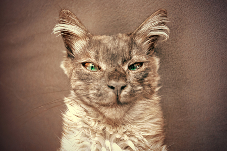 Portrait of a cunning cat with a smirk