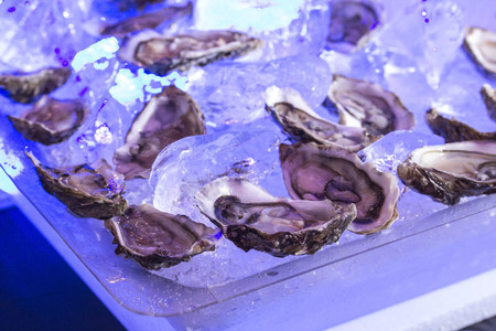 fresh raw oysters on a plated
