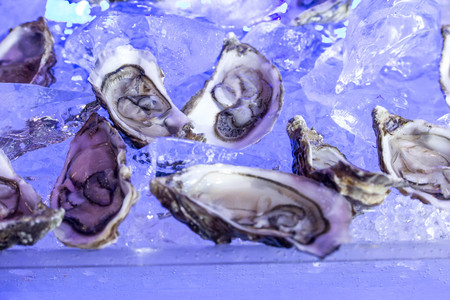 Opened oysters on blue ice seafood
