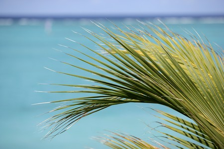 Palm frawn and turquoise water Stock Photo