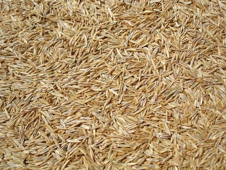 Grass Seed Background Stock Photo