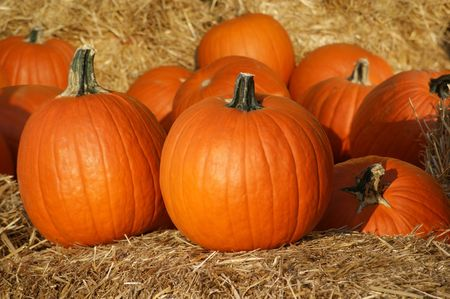 Pumpkins on straw. Stock Photo