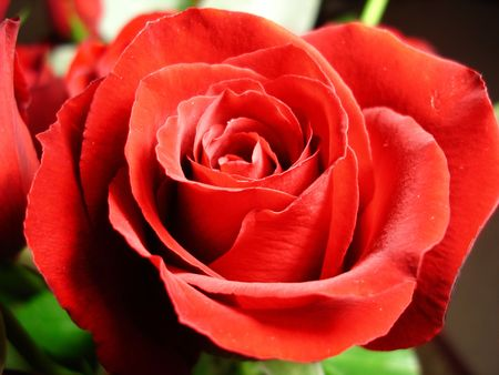Glowing Red Rose