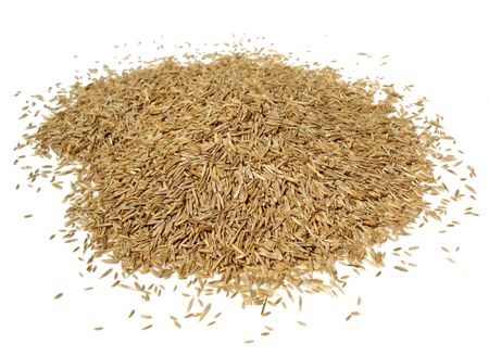 Grass Seed Pile Stock Photo