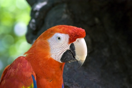 View of a colorful parrot in the wild.