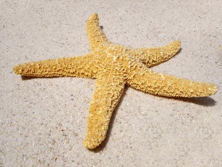 Une étoile de mer sur la plage au soleil.                                Banque d'images - 8669520