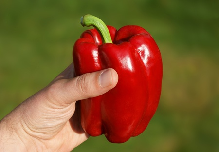 View of a hand holding a red pepper against a green background.