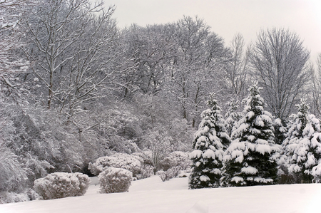 View of a winter scenic landscape with snow covered trees.