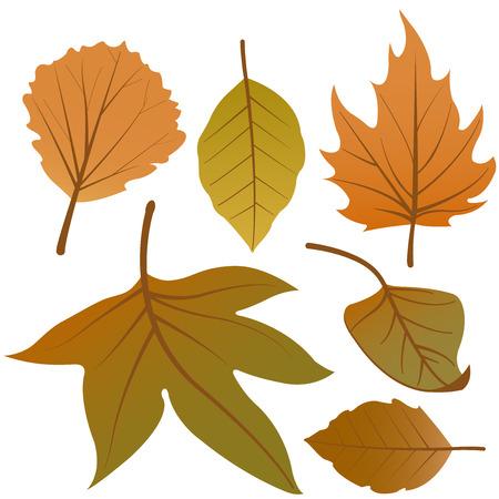 Dry autumn leaves vector set 일러스트