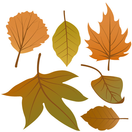 Dry autumn leaves vector set Illustration