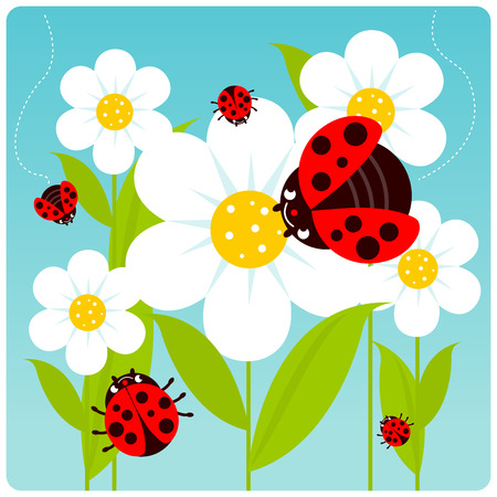springtime: Ladybugs flying on white flowers in springtime