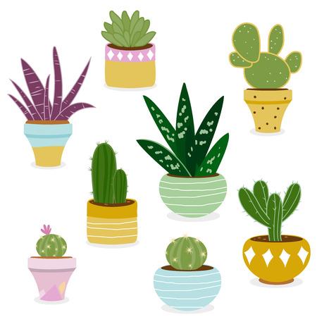 선인장과 냄비에 즙이 많은 식물