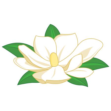 magnolia: Magnolia flower