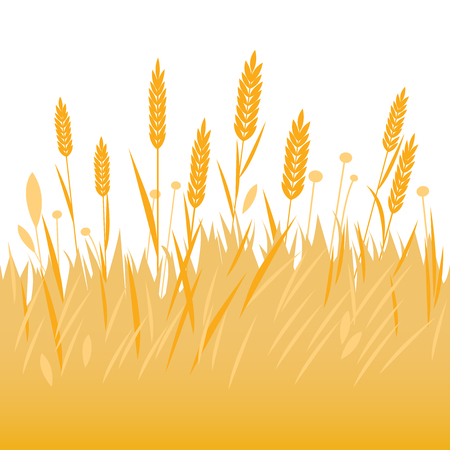 barley field: Field of wheat, barley or rye background.