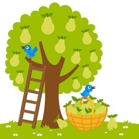 Illustratie van een perenboom, een ladder en een mand met geoogste peren.