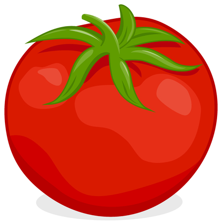 tomate: Tomate Illustration