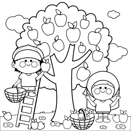 arboles frutales: Los niños que cosechan manzanas libro de colorear
