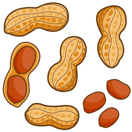 Peanuts Vettoriali