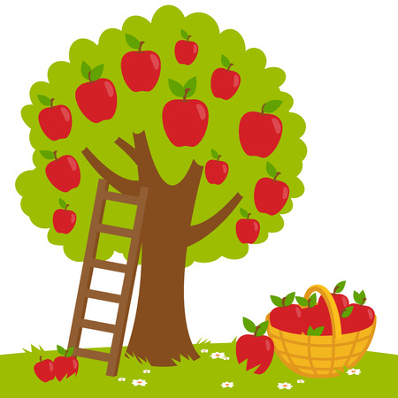 An apple tree, a ladder and a basket with harvested apples. Ilustracja