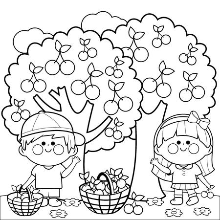 picking fruit: Kids harvesting cherries coloring book page