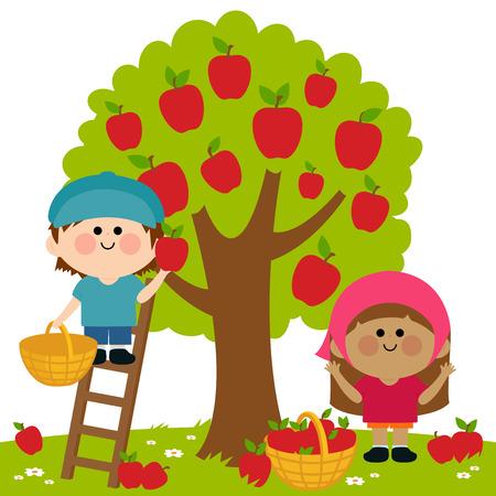 picking fruit: Children picking apples Illustration