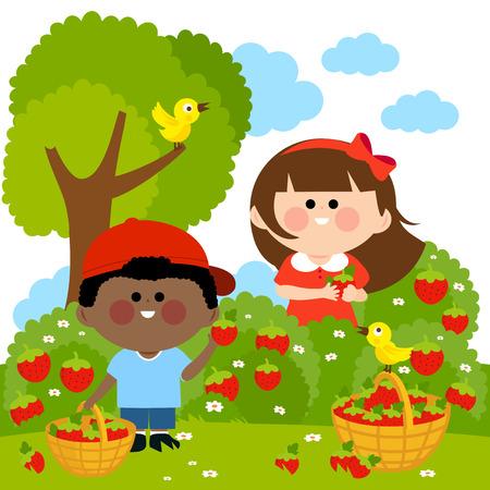 Kinderen aardbeien plukken