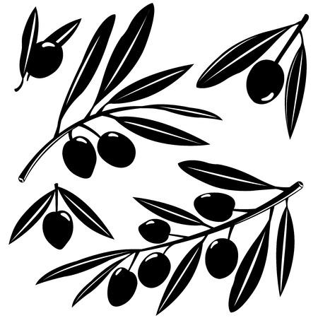 comidas saludables: Ramas de olivo Vectores