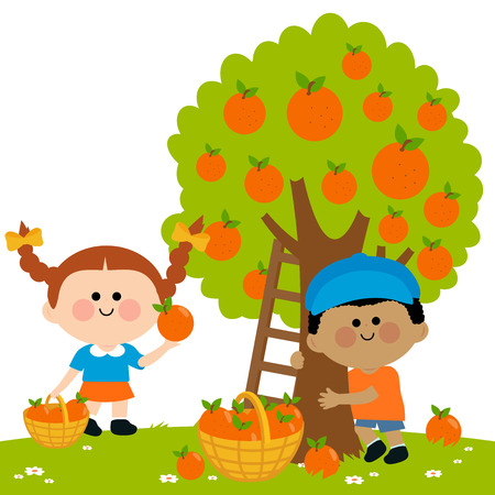 Children picking oranges