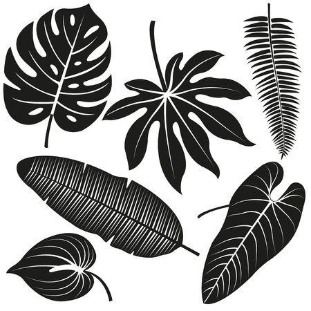 philodendron: Tropical plant leaves