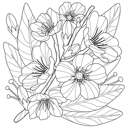 Blossoming almond tree branch with flowers. Coloring book page