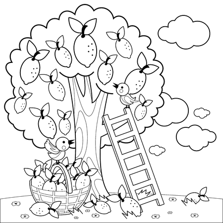 Lemon tree harvesting. Coloring book page