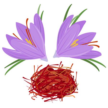 Flower crocus and dried saffron spice. Crocus sativus