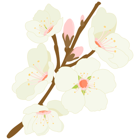 Blossoming almond tree branch with flowers. Vettoriali