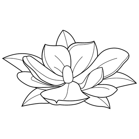 Magnolia flower. Black and white coloring book page