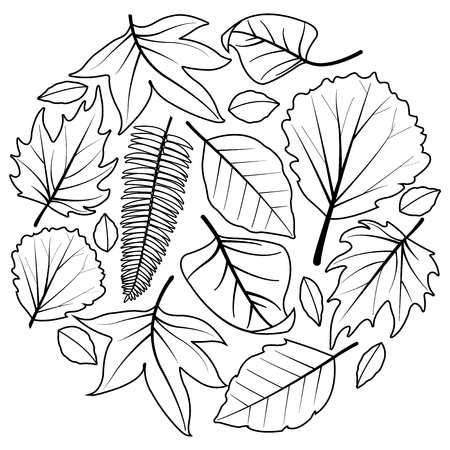 A collection of different  leaves. Vector black and white coloring book page Illustration